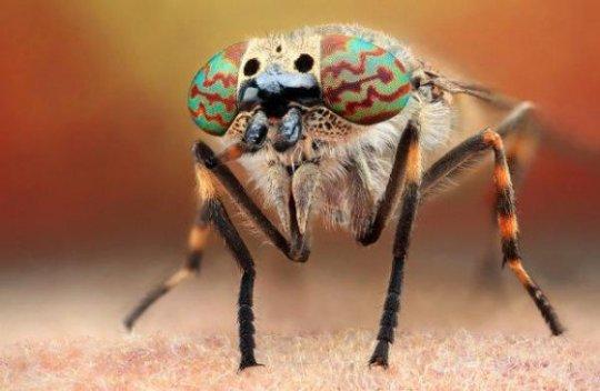 beleza-de-inseto-no-temnafotografia-por-helosaaraujo