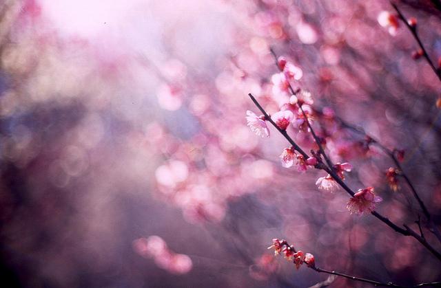 Setsun-no-temnafotografia5