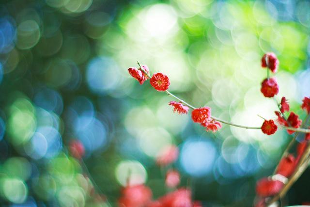 Setsun-no-temnafotografia4