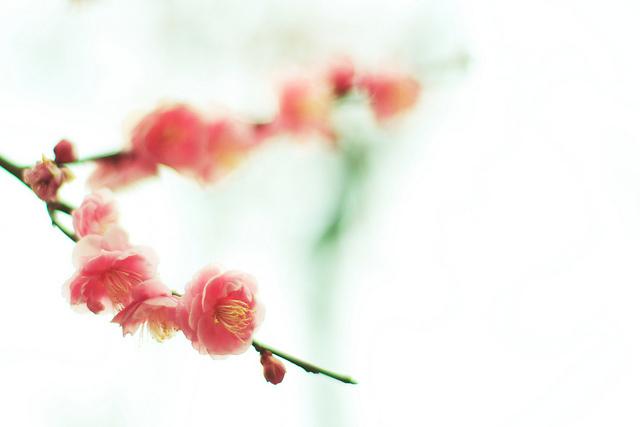 Setsun-no-temnafotografia3