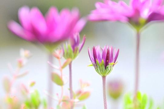 sonicoasis-flickr-no-temnafotografia9