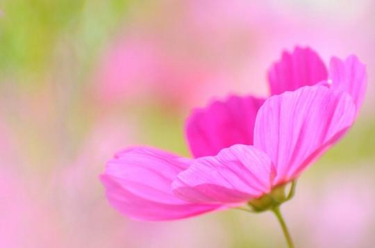 sonicoasis-flickr-no-temnafotografia3