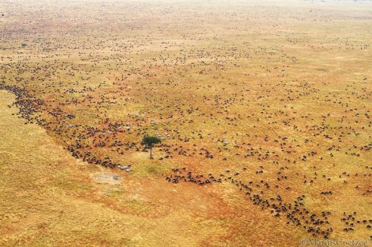 marius-coetzee-africafotografada-no-temnafotografia-por-helosaaraujo