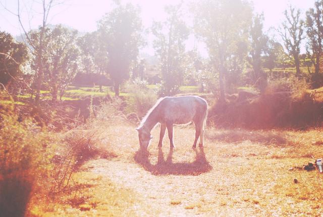 rachel-fotografia-temnafotografia4